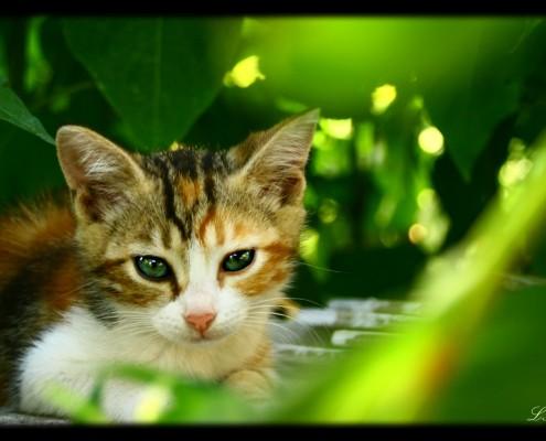 acupunctuur kattenallergie