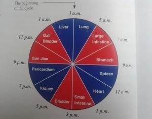 De orgaanklok in de TCM